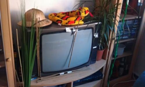 Mein Fernseher in seiner schönsten Verkleidung: Aufwändig für die Dschungel-Camp-Parties dekoriert