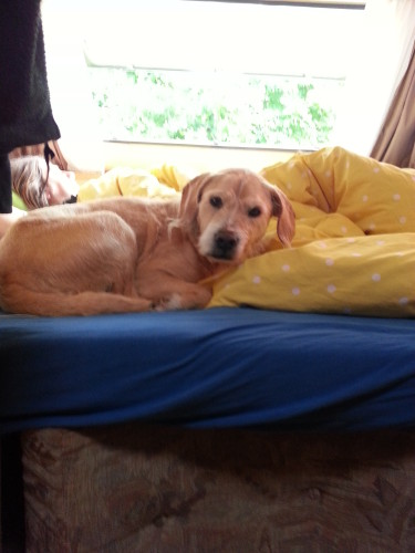 Frau Hund hat im Campingwagen schnell klare verhältnisse geschaffen, wer wo zu liegen hat.
