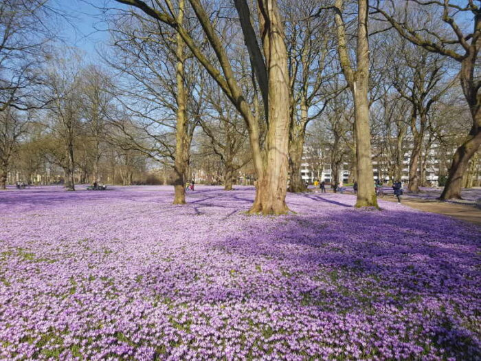 Der Husumer Schlosspark im März 2021