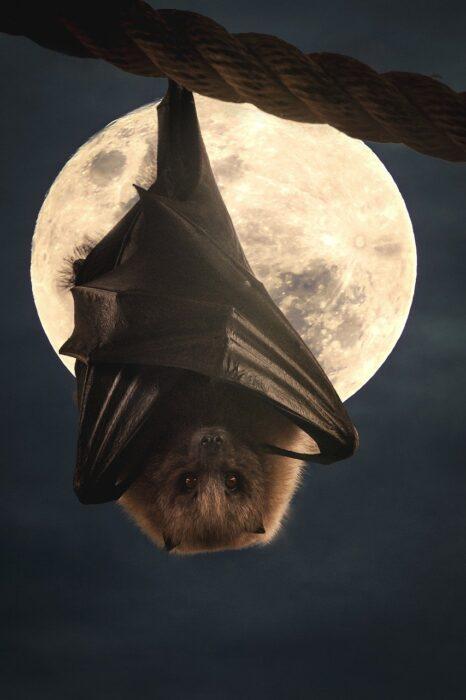 Eine Fledermaus hängt mit zusammengelegten Flügeln von einem Seil herunter im Hintergrund scheint der Vollmond. Es wirkt wie eine Illustration als ein echtes Foto.